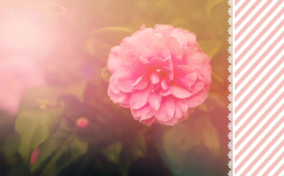 teacup garden  (1 of 1)-3 2