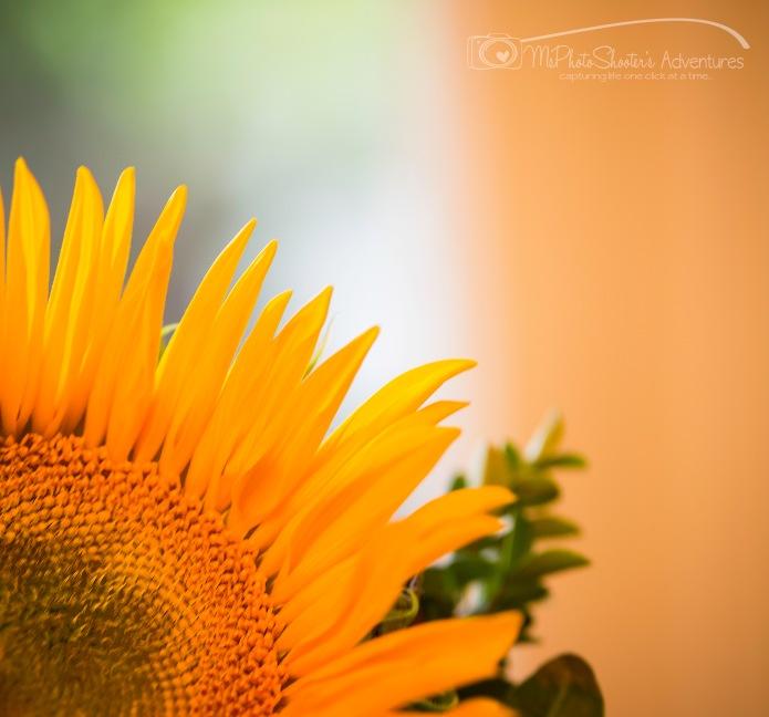 20140913-Retirement Flowers_-11