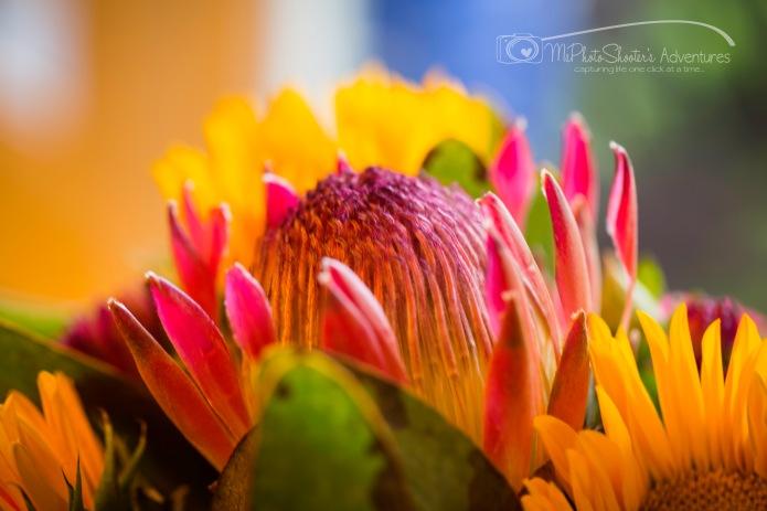 20140913-Retirement Flowers_-18