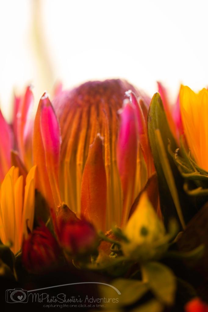 20140913-Retirement Flowers_-2