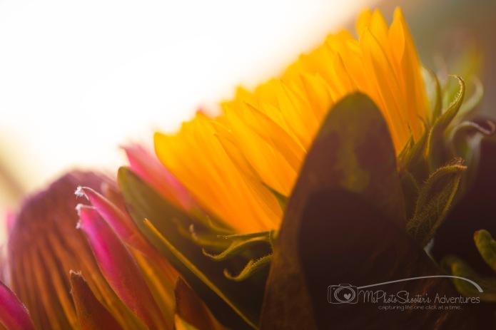 20140913-Retirement Flowers_-3