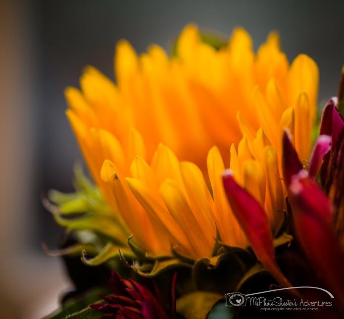 20140913-Retirement Flowers_-6